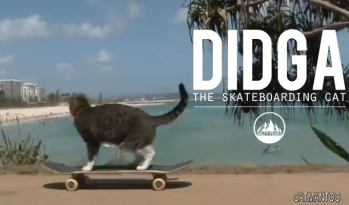 Awesome-Skateboarding-Cat-Didga