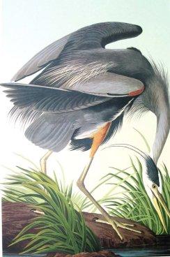 Birdsam1Web