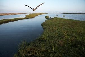 Bolsa_Chica_Wetlands_1743
