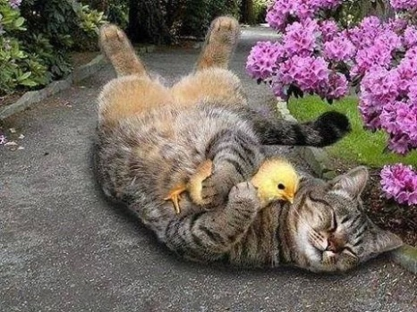 cat-duckling