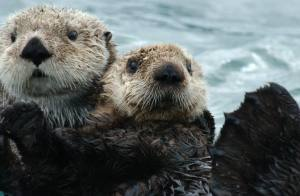 couple otter2