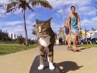 didga cat-skateboard-600