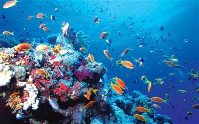 fish undersea