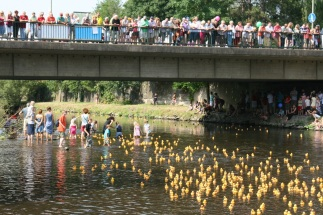 Gr. bridge rubber ducky race