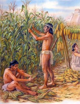 maize-in-ancient-mexico