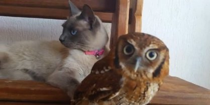 o-owl-and-cat-friends-facebook