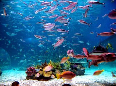Ocean Park wiki