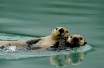 OtterMomPup