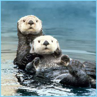 seaotters2