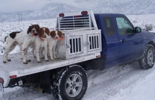 snowdogrun-015-600x388