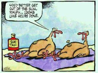 Turkeys sunbathing