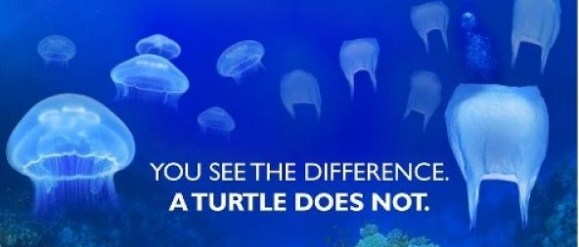 turtles-cant-see-the-difference