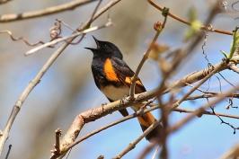 bird chirping