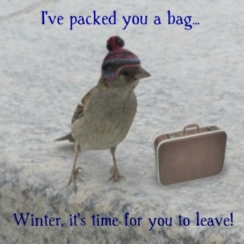 bird-suitcase