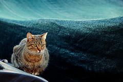 cat boat surf