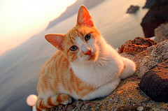 Cat on beach