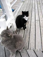 cats pier
