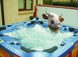 cow jacuzzi tub