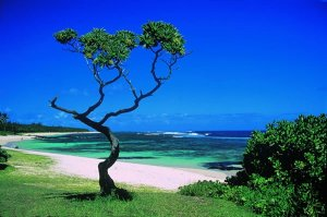 The-beauty-of-mauritius