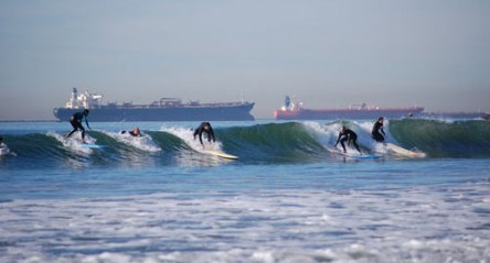 seal bch.surfers