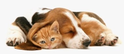 dog-and-cat-sleeping-together
