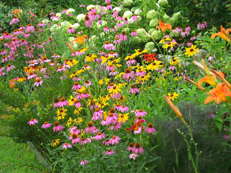 butterflies and hummingbirds in your garden