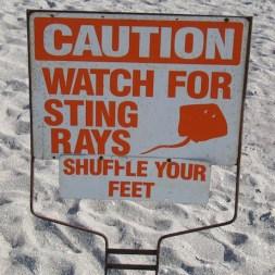 stingray.sign_
