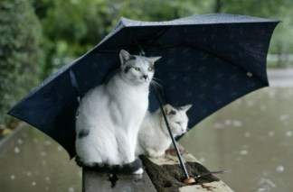 rain cats with umbrellas