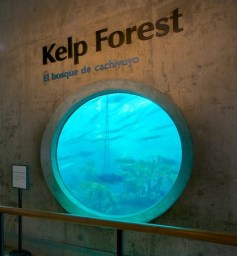 kelp forest entrance