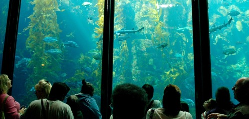 kelp-forest-exhibit-visitors