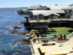 Monterey_Bay_Aquarium_-_DSC07002