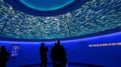 Ocean's Edge Tank