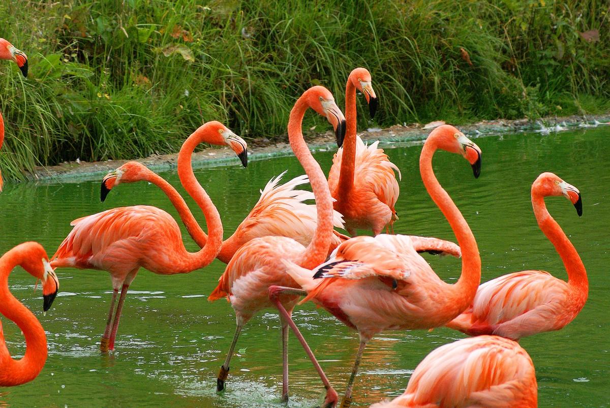 Pink Flamingos – Colorful and Fun! | Surf\'n Beach Scene Magazine