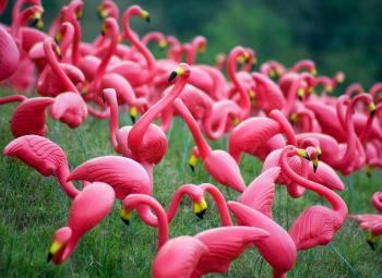plastic flamingos in yard
