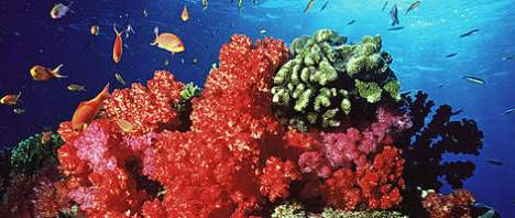coral reef in Fiji