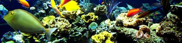 fish corals