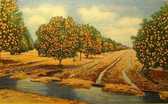 orange_grove