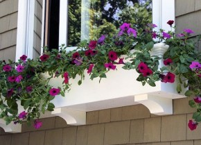 window-boxes