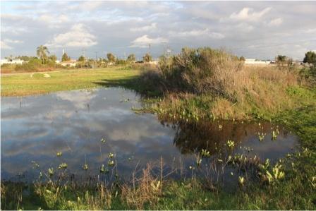 Banning wetlands