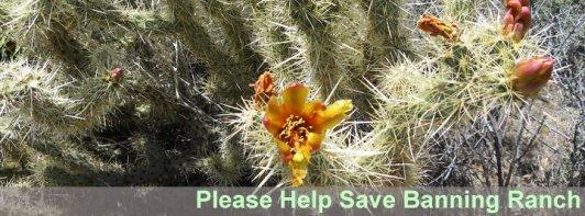 cactus flowers help banner