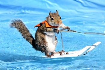 squirrel surfing
