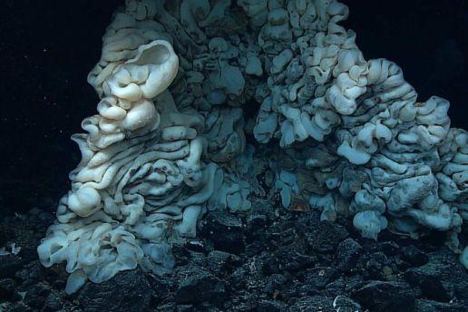 giant-sponge