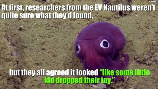 purple-squid-with-text