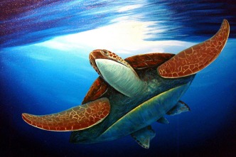sea-turtles